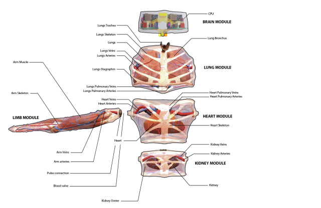 anatomy_no_background-e1460121232638-640x416
